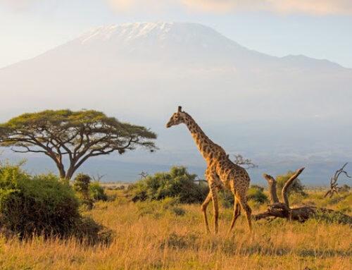 Trends für den Afrika-Tourismus 2021