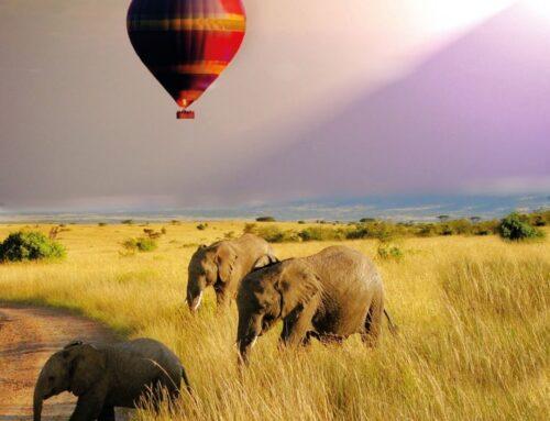 Safari mit Abstand – in Afrikas unberührte Naturlandschaften entfliehen