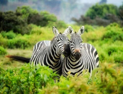 Nachhaltiges Reisen in Afrika – Verantwortungsvoller Tourismus für Mensch und Umwelt